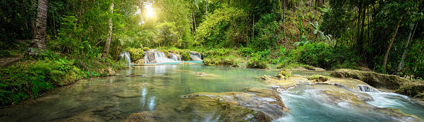 Deep forest waterfall  National Park. Panoramic view stock photo