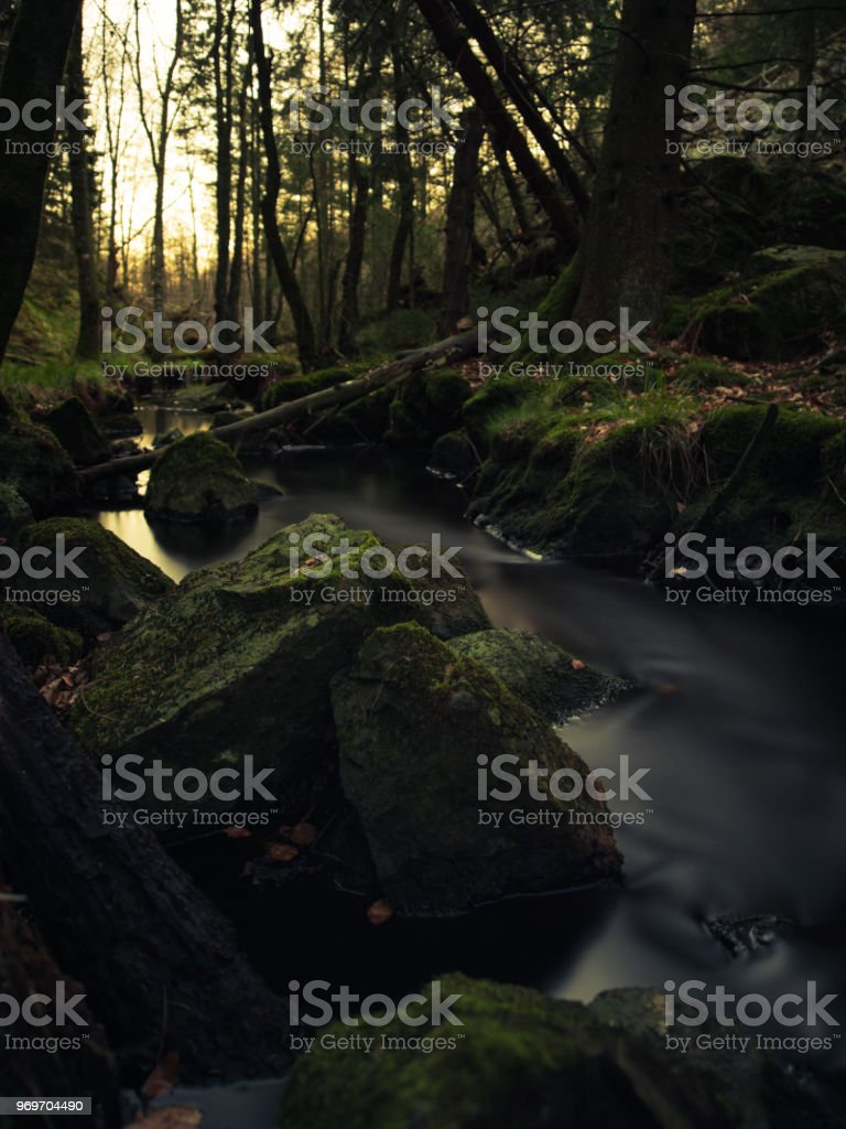 Deep forest with a creek (XXXLarge) stock photo