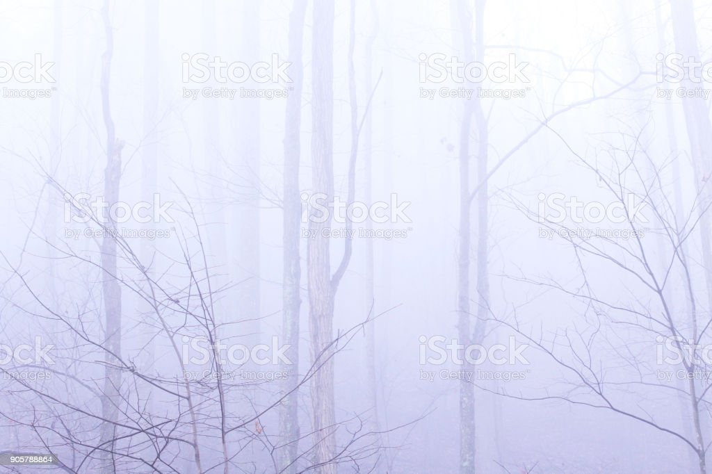Deep Forest with Heavy Fog and Mist with a Mysterious Look and Feel stock photo