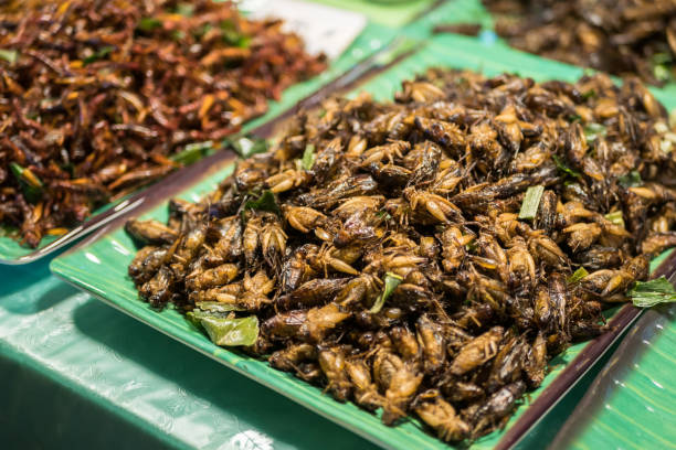 Deep fried crickets selling at the Bangkok night market. Fried insects is one of the famous snack in Thailand. stock photo