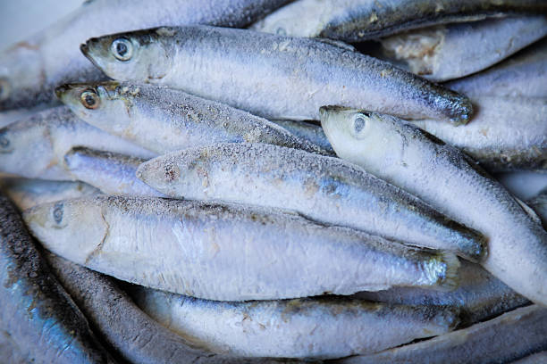 Royalty free frozen fish pictures images and stock photos for Frozen fishing pole
