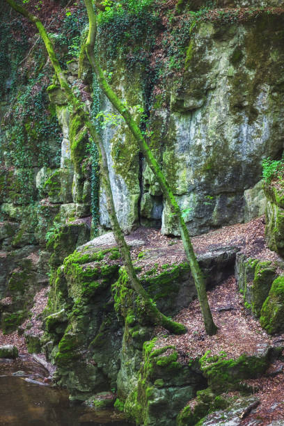 Deep impressive gorge with trees growing on cliffs stock photo
