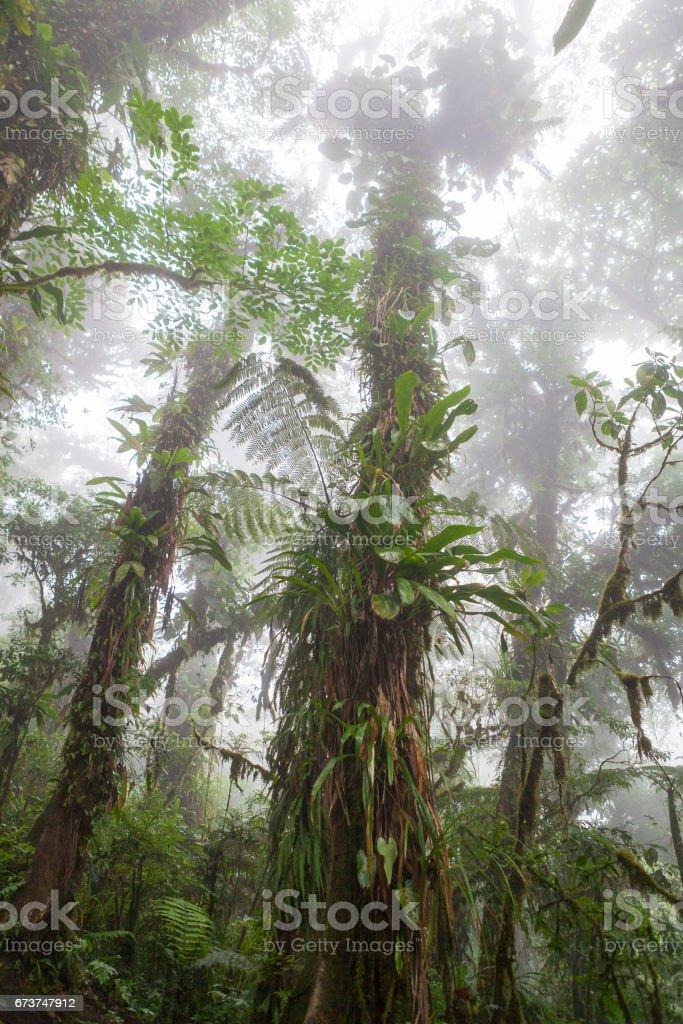 Deep in lush foggy rainforest royalty-free stock photo