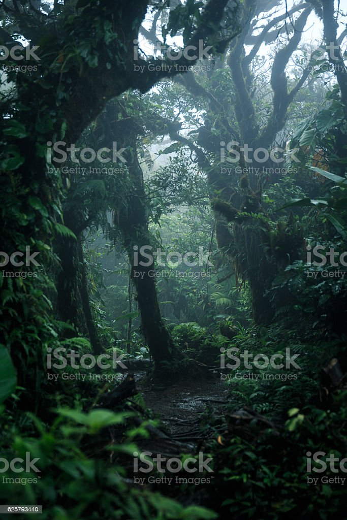 Deep in lush rainforest - foto de acervo