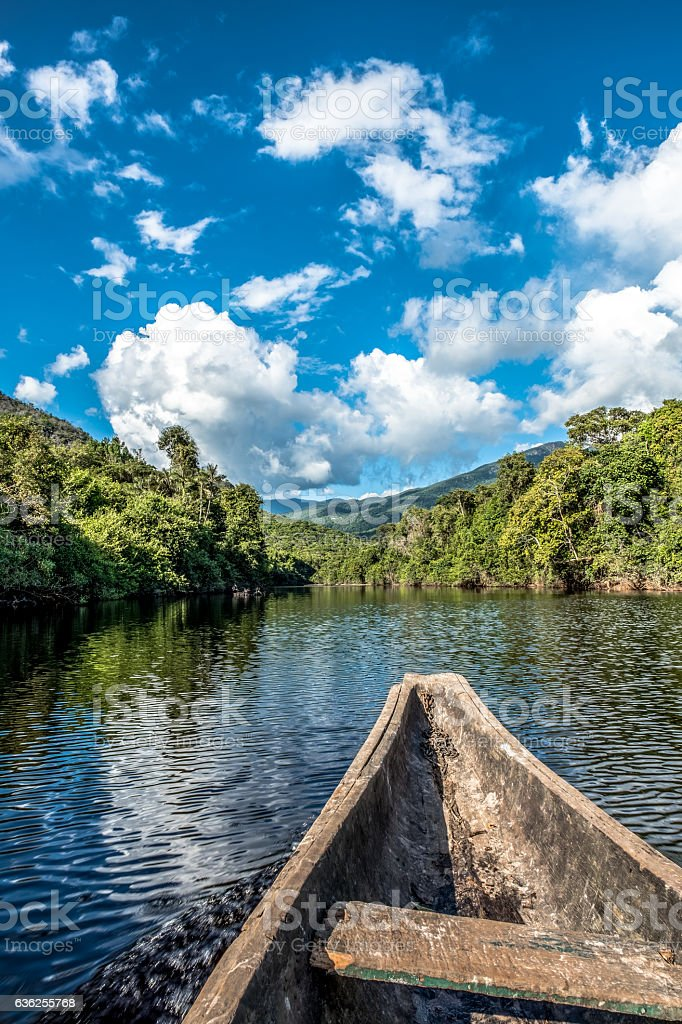 Deep in the Amazonian Rainforest stock photo