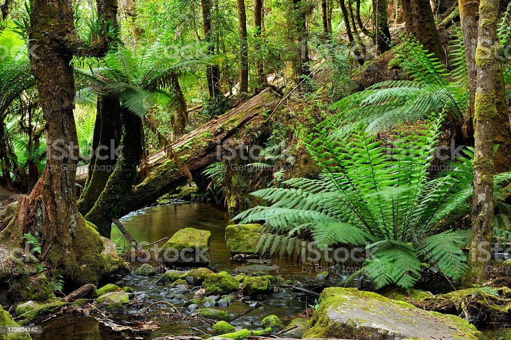 Deep in the rainforest with ferns and stream royalty-free stock photo