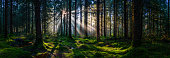 istock Deep in the wild woods sunbeams illuminating green forest panorama 1292588329