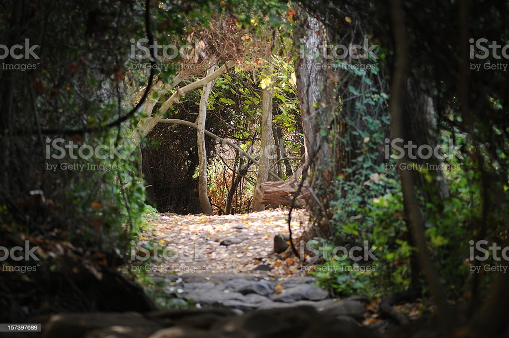 Deep in the woods royalty-free stock photo