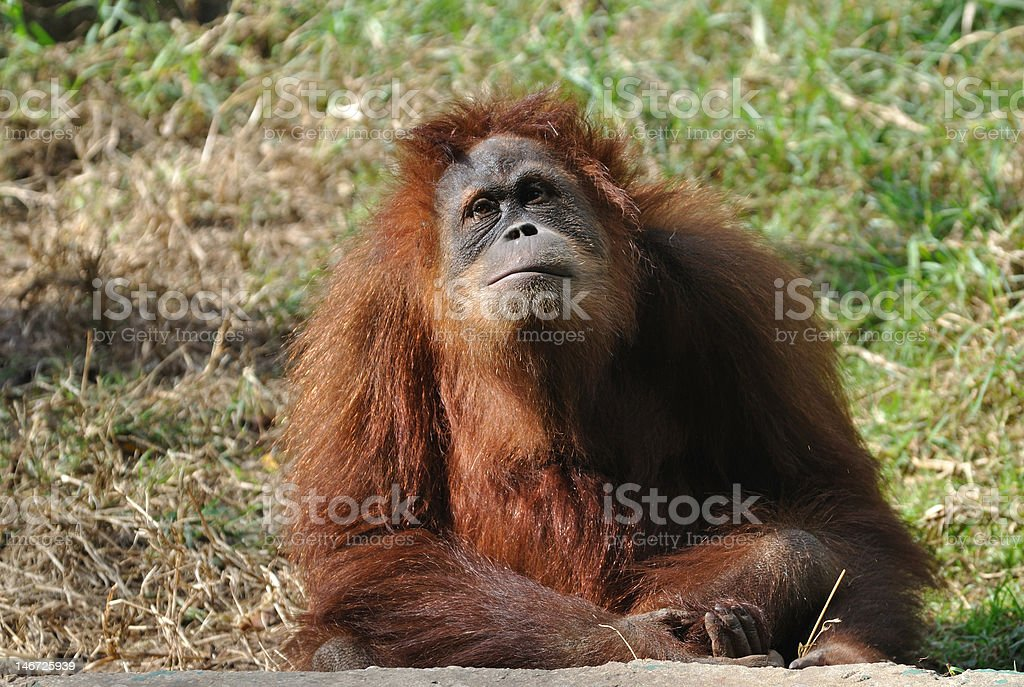 deep in thoughts royalty-free stock photo