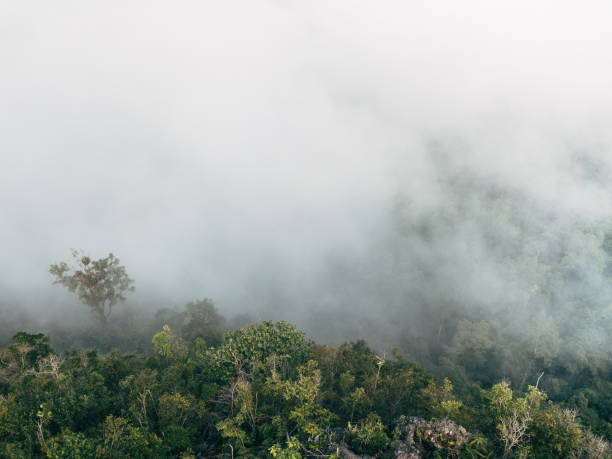 Deep inside Borneos jungle stock photo