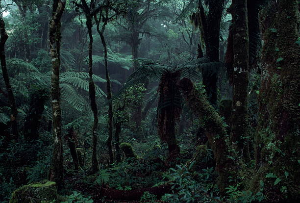 Deep Jungle Deep Rain Forest Scenery tropical rainforest stock pictures, royalty-free photos & images