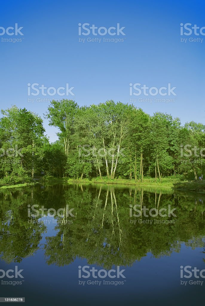 Deep lake forest nature landscape royalty-free stock photo