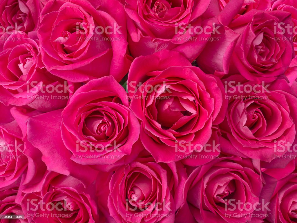 Deep Pink Roses Bouquet Background Stock Photo Download Image Now Istock