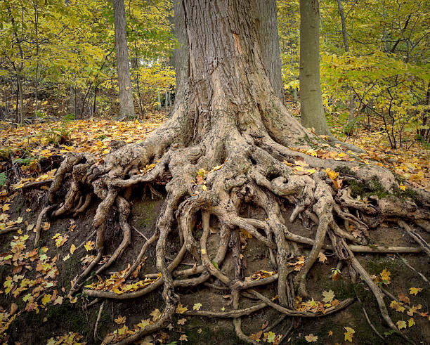 deep roots - creation stock photos and pictures