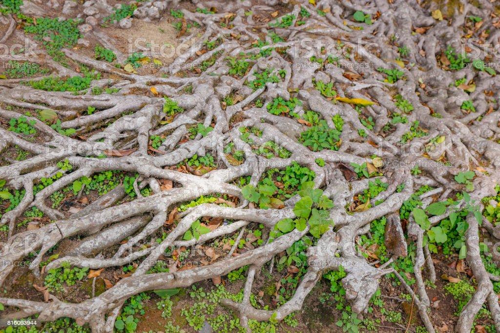 Profundas raíces fondos con textura - foto de stock