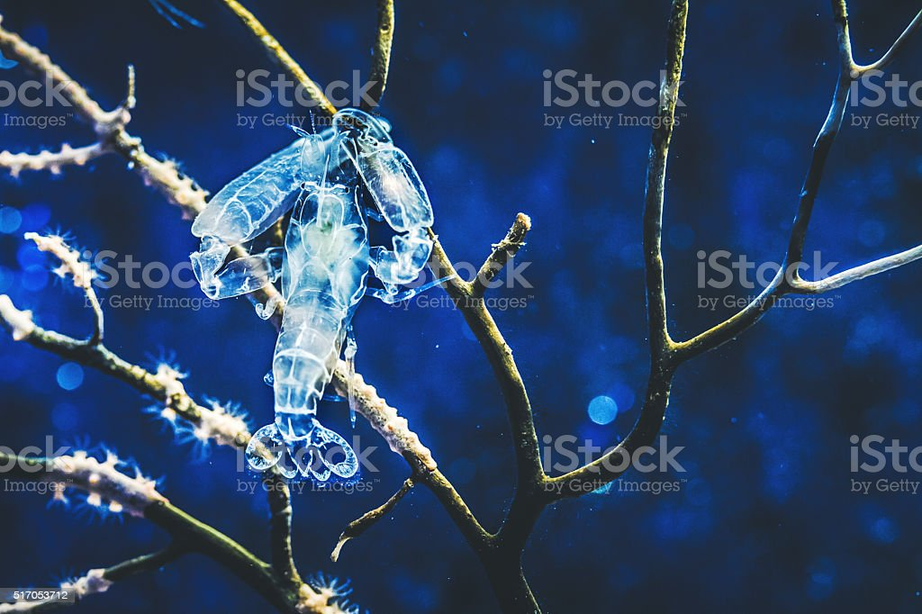 Deep sea creatures: small lobster stock photo