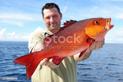Tropical fishing, big game fishing. lucky fisherman holding a big snapper fish