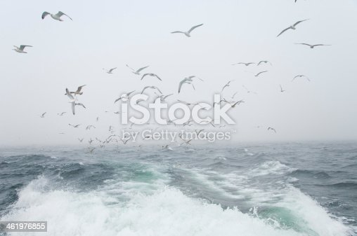 932662672 istock photo Deep sea fishing. The catch of cod. 461976855