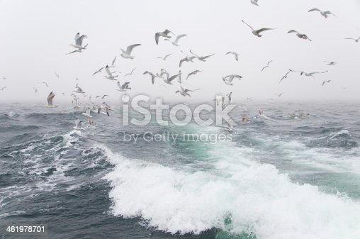 932662672 istock photo Deep sea fishing. The catch of cod. 461978701