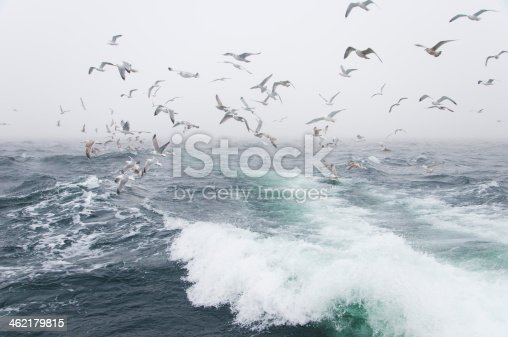 932662672 istock photo Deep sea fishing. The catch of cod. 462179815