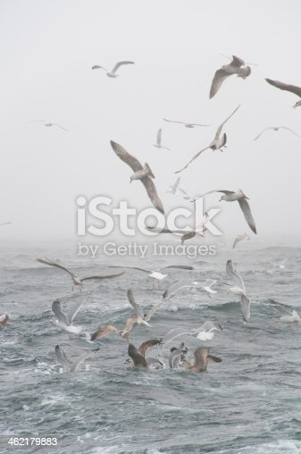 932662672 istock photo Deep sea fishing. The catch of cod. 462179883