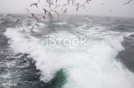 932662672 istock photo Deep sea fishing. The catch of cod. 462184197