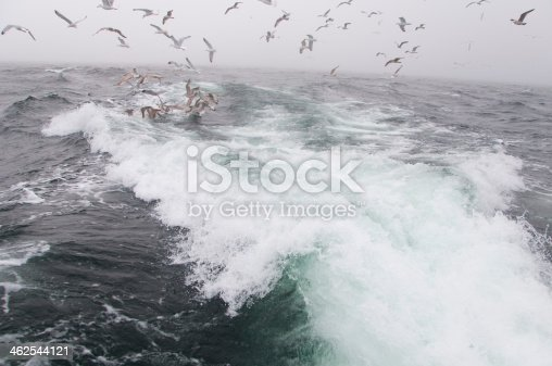 932662672 istock photo Deep sea fishing. The catch of cod. 462544121