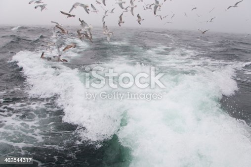 932662672 istock photo Deep sea fishing. The catch of cod. 462544317
