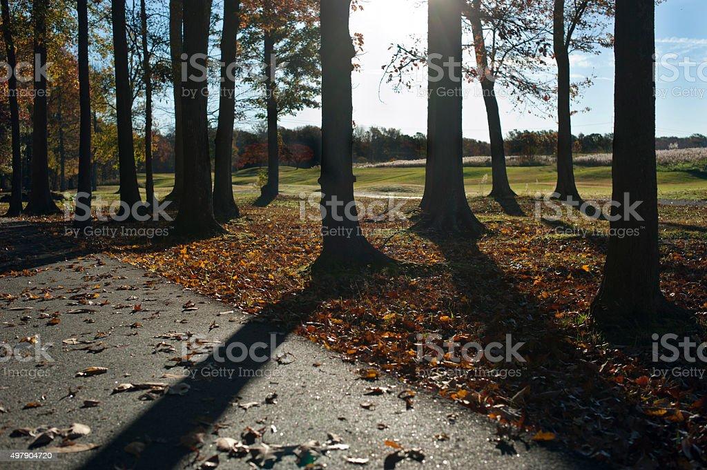 Deep Shadows on walking trails stock photo