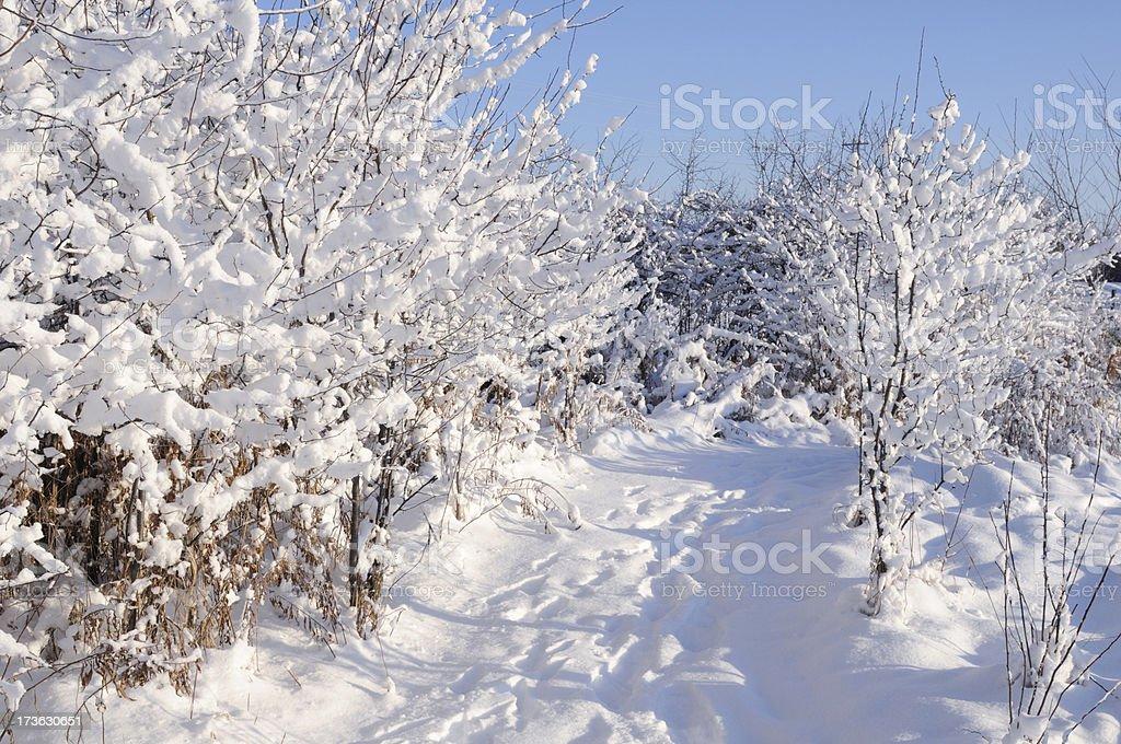 Deep Snow on the Path royalty-free stock photo