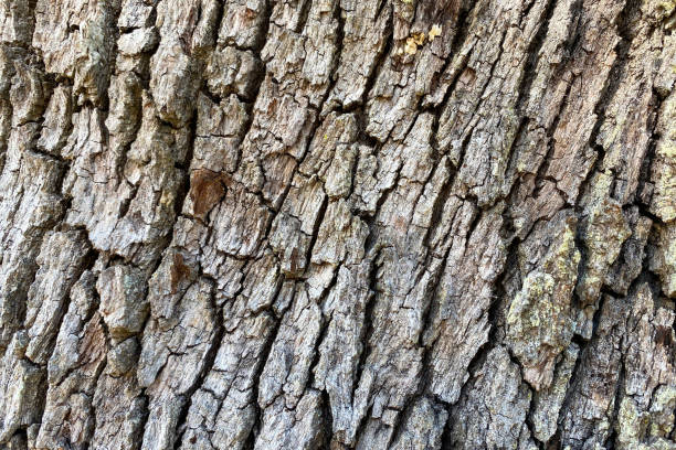 deep textured natural tree bark angle view close-up stock photo