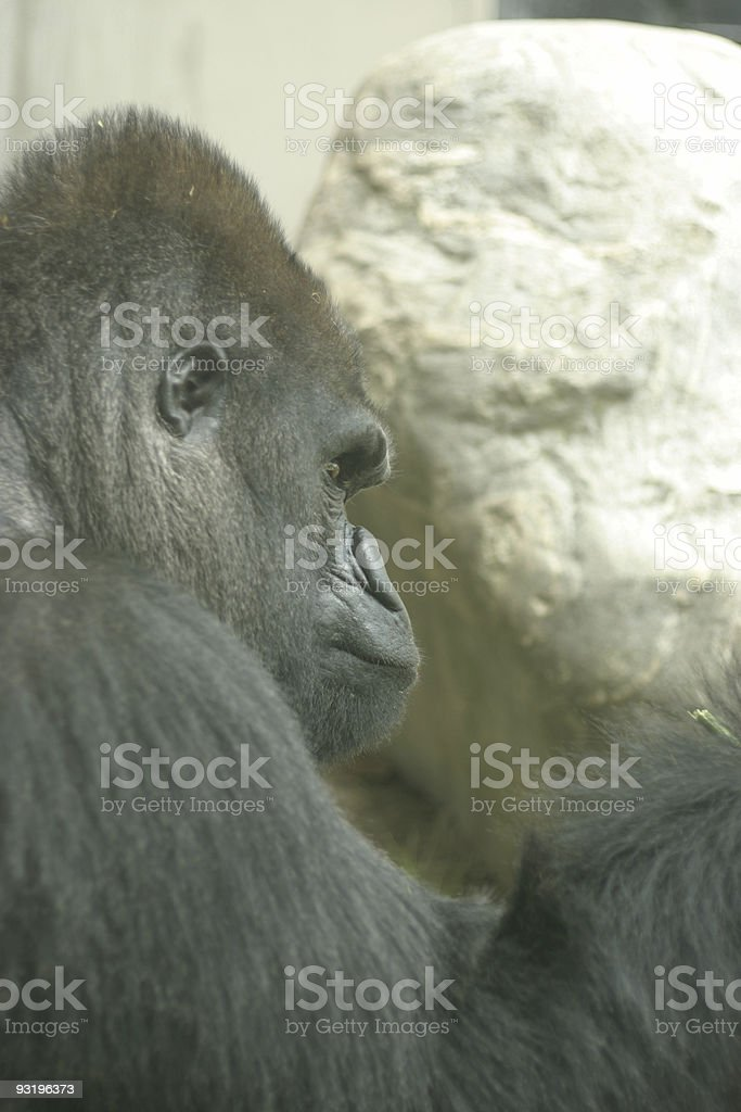 deep thought, or not? stock photo