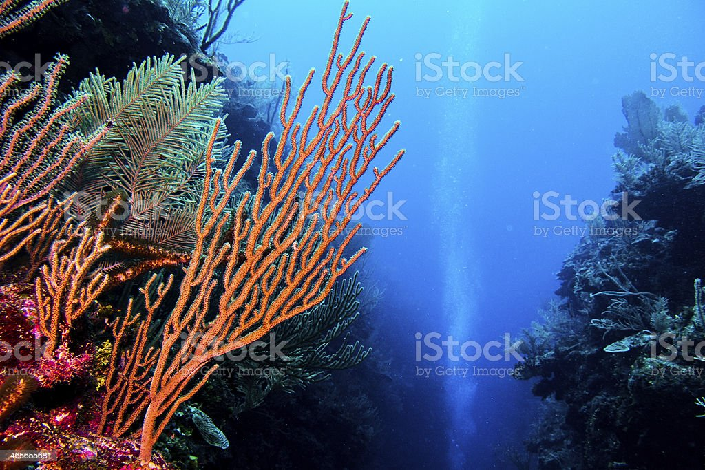 Deep under the water of The Caribbean Sea  stock photo
