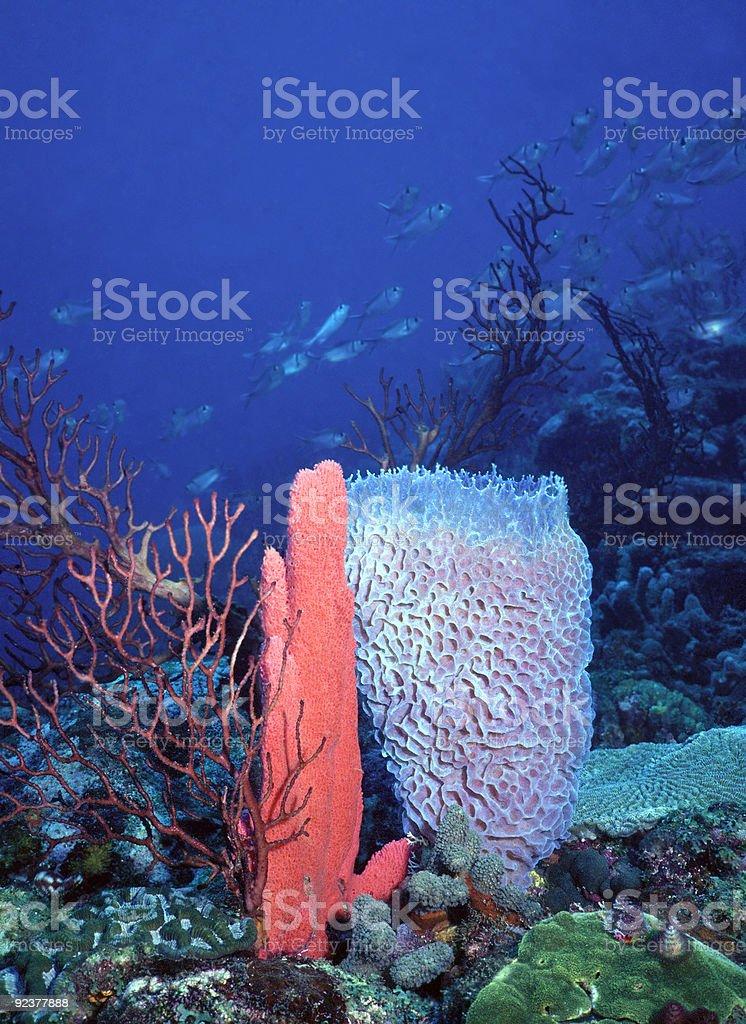 SVG deep water reef stock photo