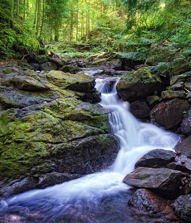 1131408581 istock photo Deep wood. Carpathians, Ukraine. 600101528