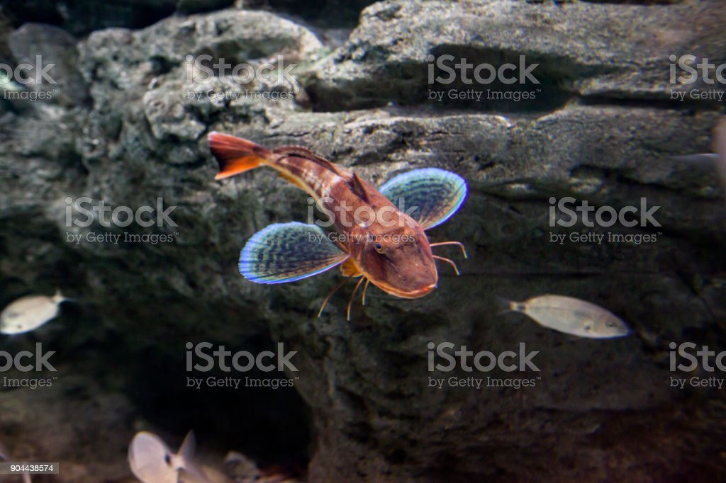 Deepwater Fish stock photo