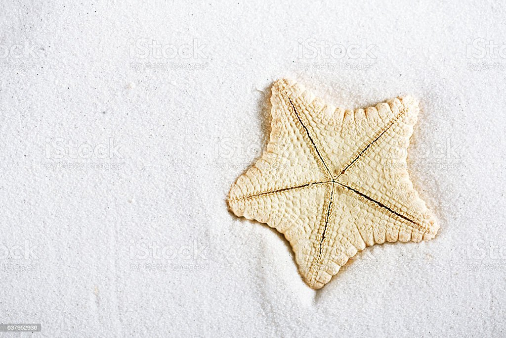Deepwater Rare Starfish In White Beach Sand Royalty Free Stock Photo