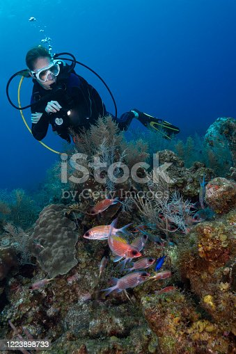 Caribbean marine life with the Deepwater Squirrelfish (Sargocentron bullisi) and a female diver in Grand Cayman - Cayman Islands
