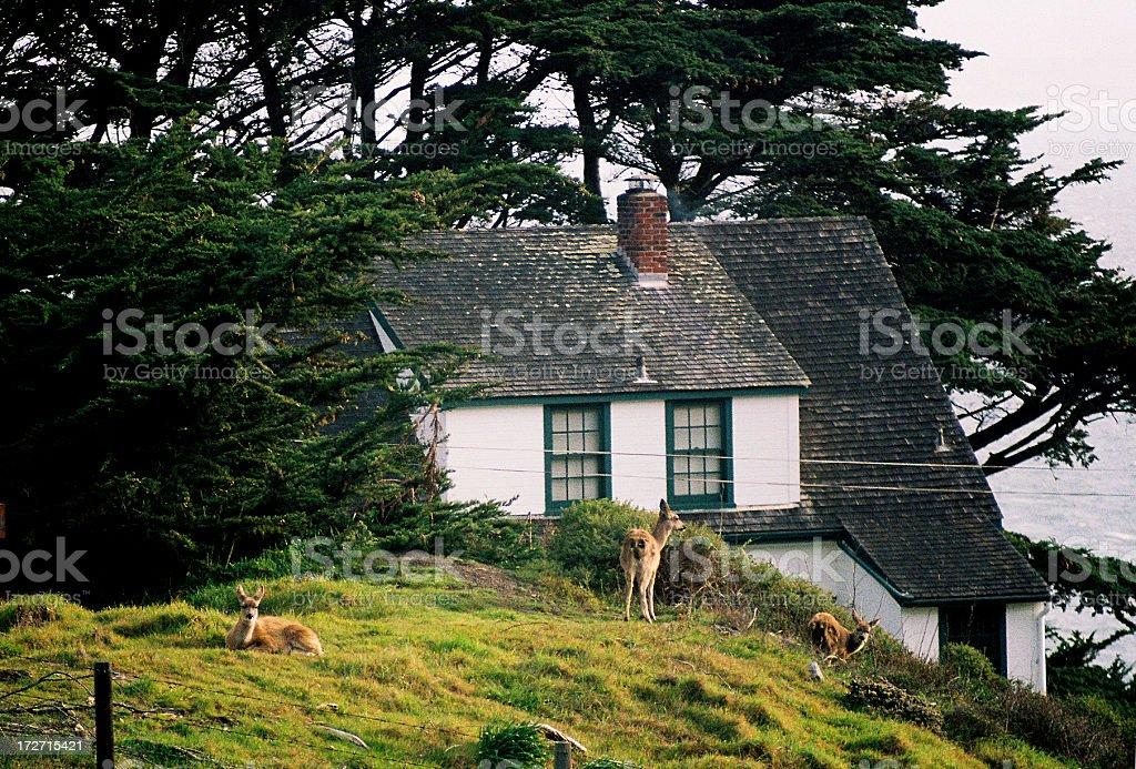 Deer and California coast home stock photo