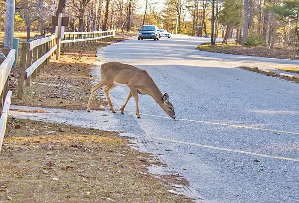 deer and vehicle - krockad bil bildbanksfoton och bilder