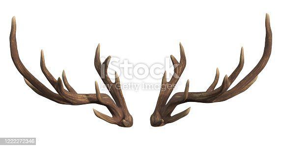 deer, isolated, antler, white background, 3d rendering
