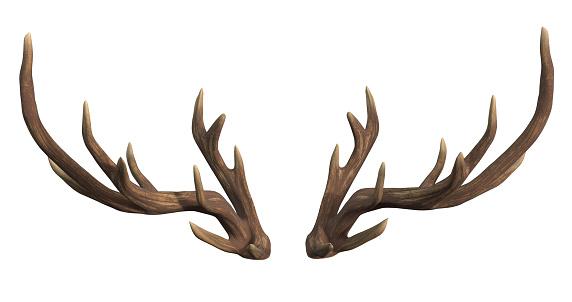 deer, isolated, antler, white background, 3d rendering
