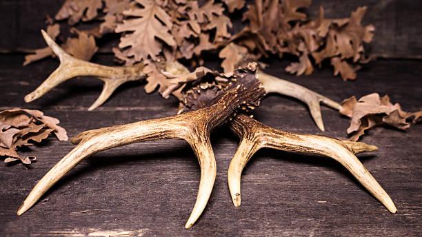 deer antlers on wooden background - deko geweih stock-fotos und bilder