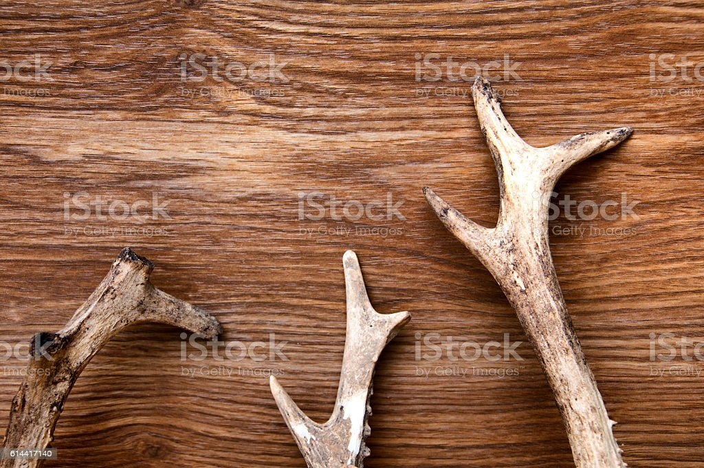 Deer antlers on wooden background stock photo