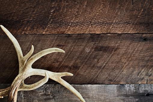 istock Deer Antlers 1015474424