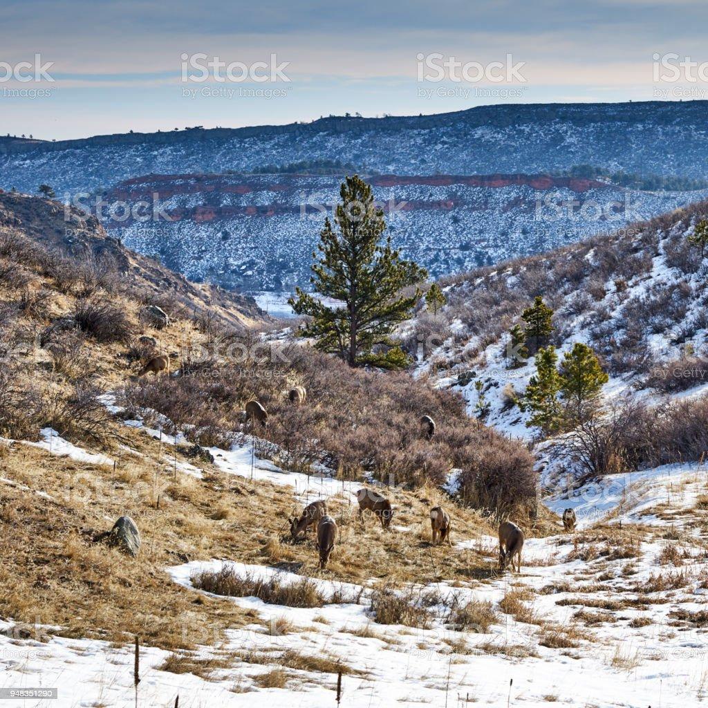 Deer at Horsetooth mountain park stock photo