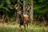 istock Deer at rutting season in the forest 1285068570