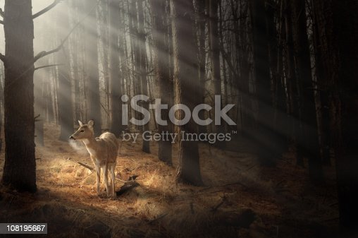 istock Deer bathing in sunlight 108195667