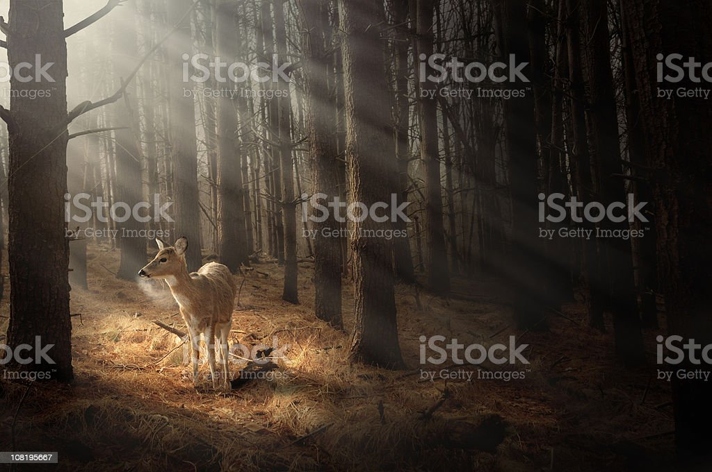 Deer bathing in sunlight stock photo