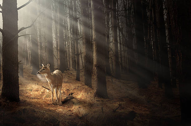 deer bathing in sunlight - wildplassen stockfoto's en -beelden